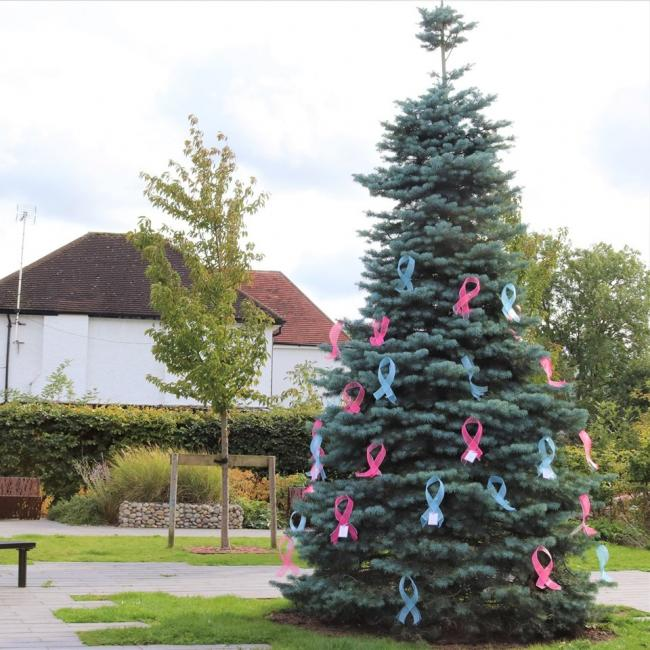 The tree in Borehamwood with pink and blue bows