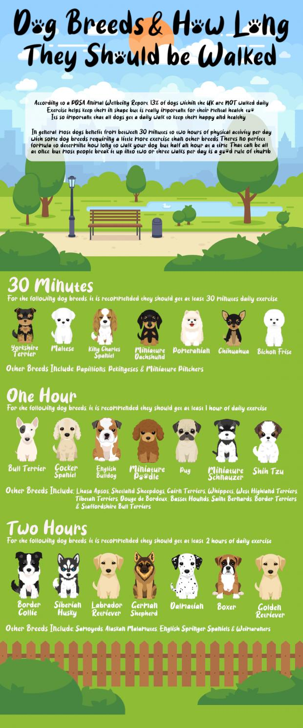 Borehamwood Times: A full list of advised walking times for dogs