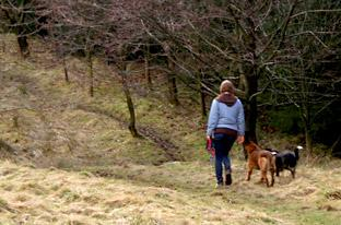 Charity calls for volunteer dog walker