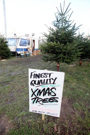 The Christmas tree site in Stirling Corner