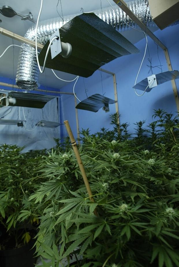 The campaign comes as the number of detected cannabis factories rose by 15 per cent