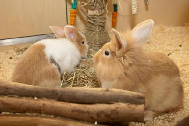 The Pets at Home store, in Borehamwood Shopping Park, will host the workshops to teach the public how to care for their rabbits responsibly.